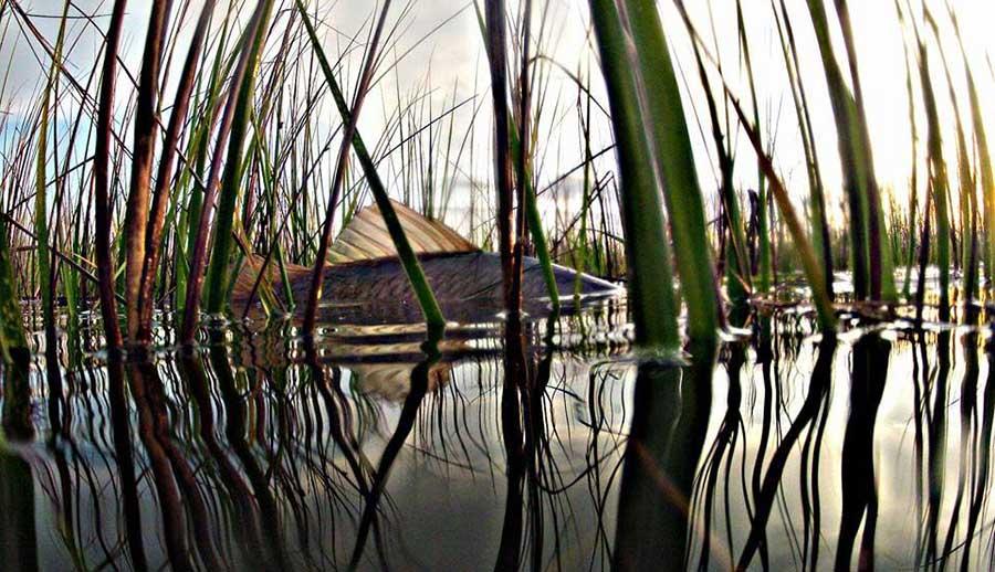 West Matagorda Bay Fishing Spots