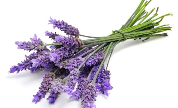 Lavender is the Best Natural Repellent for Scorpions Donna Warfield Smith