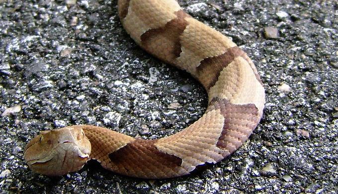 White Snakes Mouths