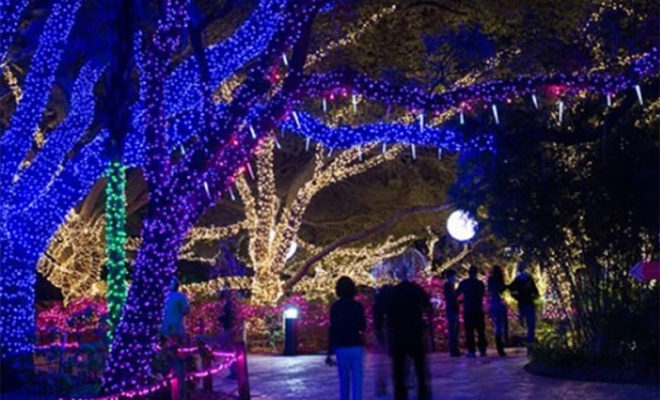 Entertainment Archives Houston On The Cheap Houston Zoo Coupons And  Discount Tickets Ways To Save Big Houston Zoo Lights Open Through January  Houston Zoo Is ...