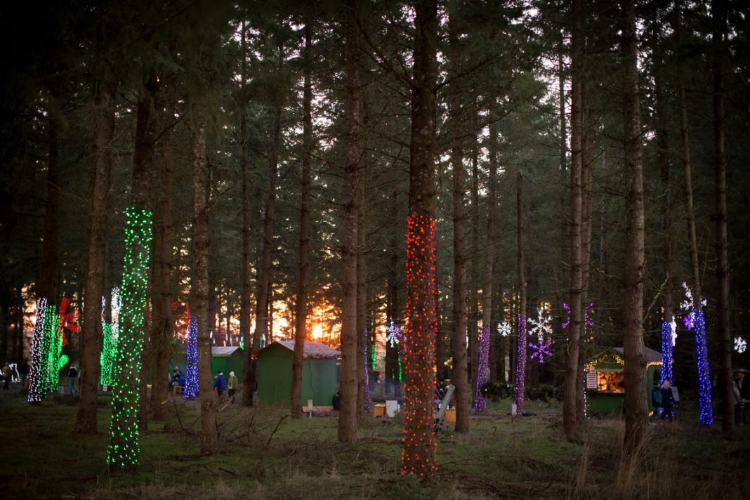 Oregon Zoo Christmas Lights