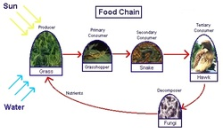 Food Web Interaction with explanation - Sahara Desert