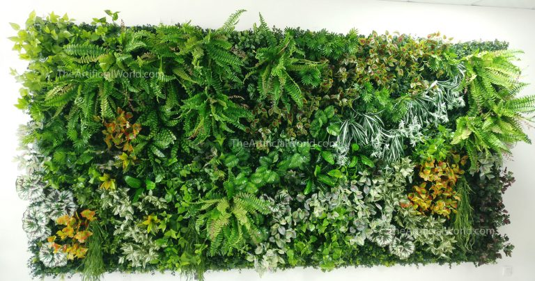 Kinds Indoor Plants