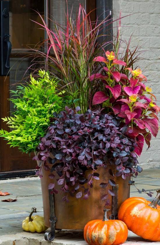 Unusual Planters Container Gardens