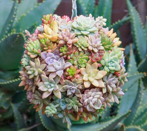 Vegetable Garden Box Plants