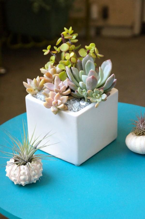 Mini Cactus Plants