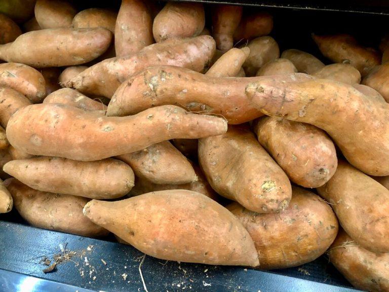 sweet potato bill