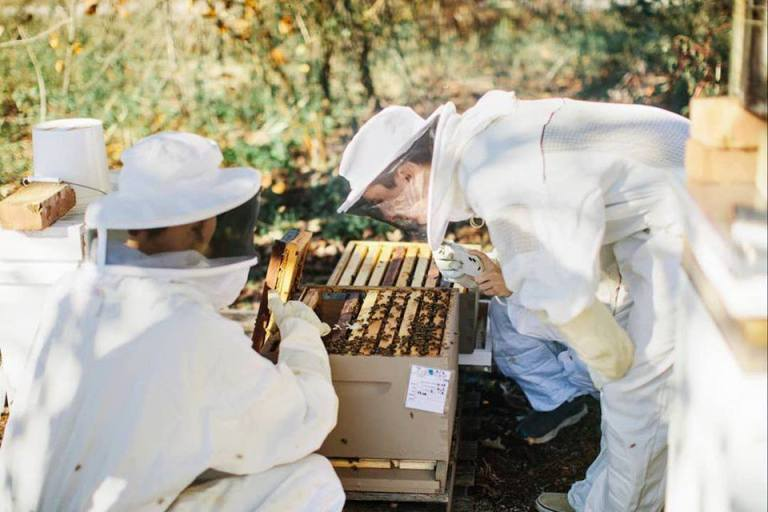 Alabama Honey Festival is in Owens Cross Roads October 3—add to your calendar now
