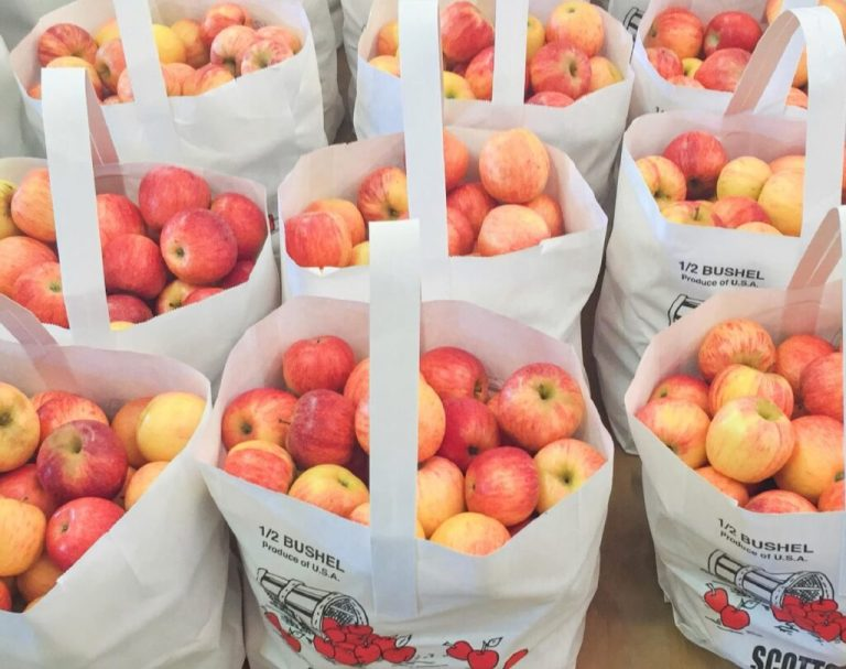 5 of the best apple picking orchards in north Alabama