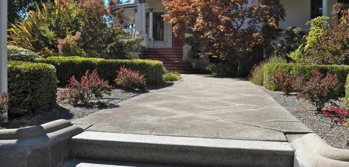 Dog Friendly Landscaping Without Grass Ideas Amp Options