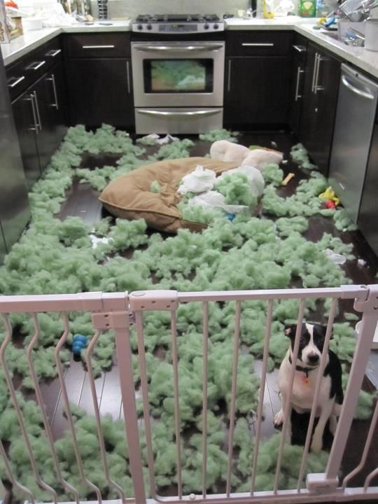 How To Make An Indestructible Dog Bed