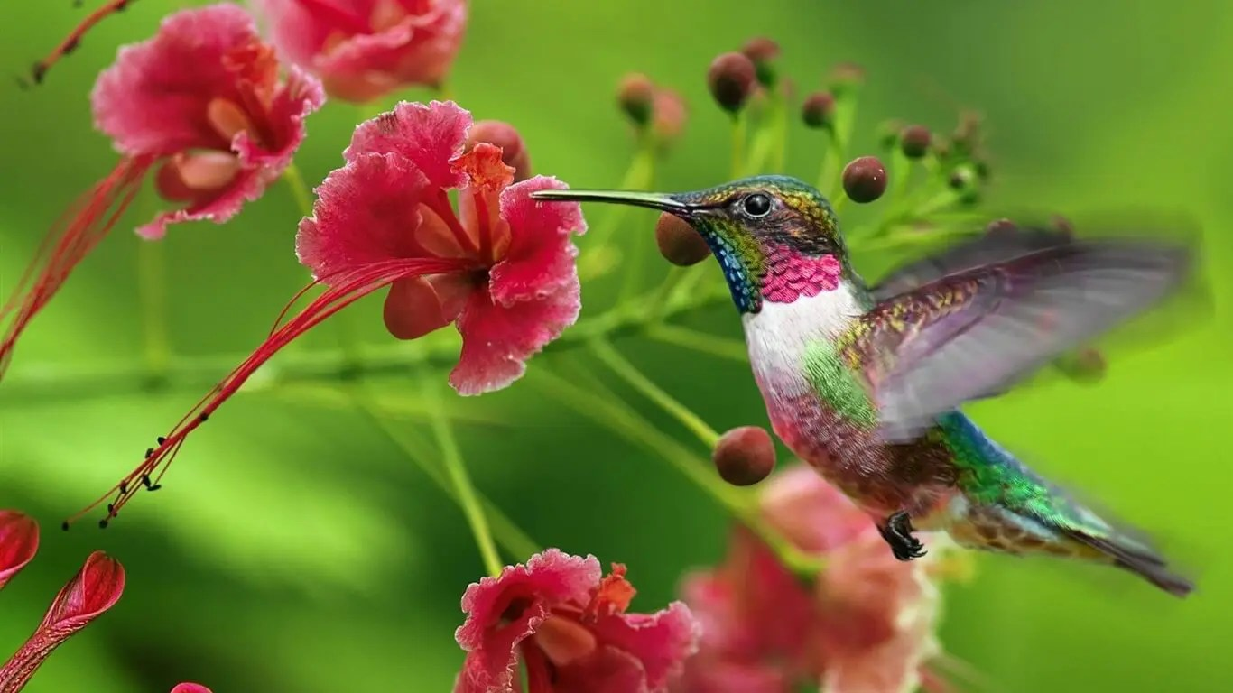 Flowers Hummingbirds