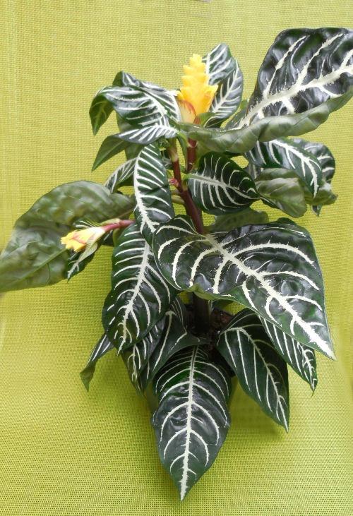 Easy Maintain Indoor Plants
