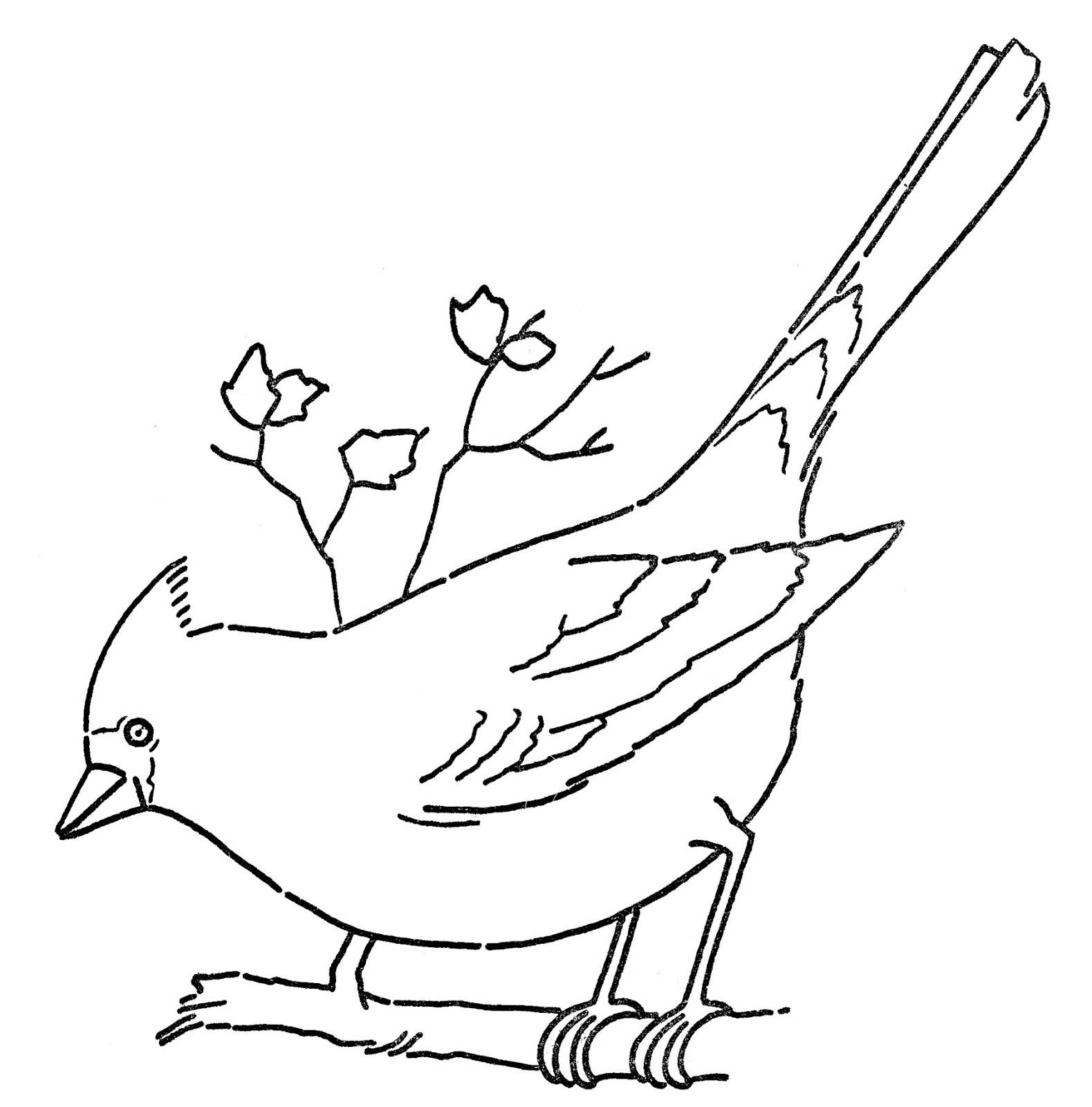 Line Art Coloring Page Cardinal On Branch The Graphics Fairy