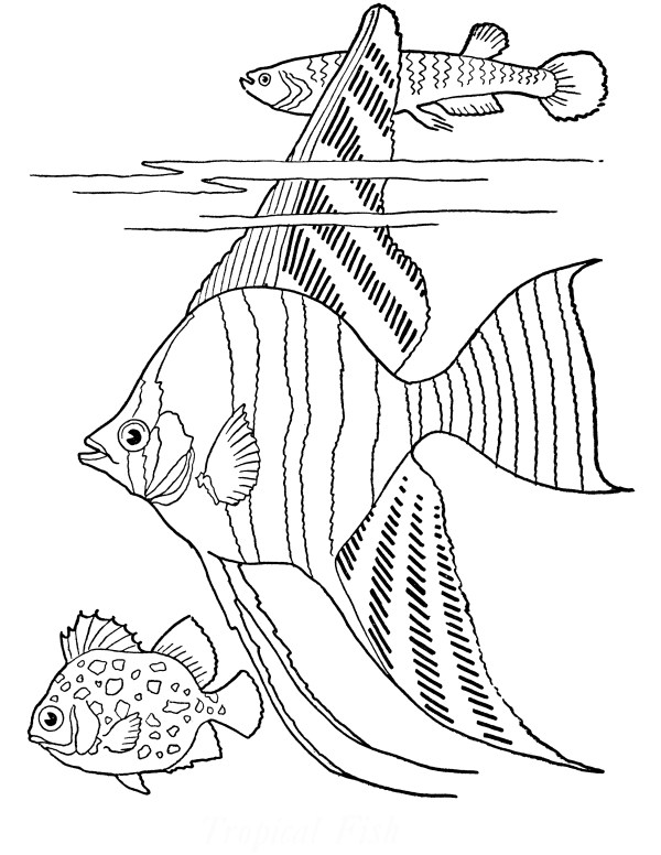 tropical fish coloring pages # 2