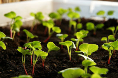 5 Steps to Grow Veggies in Containers