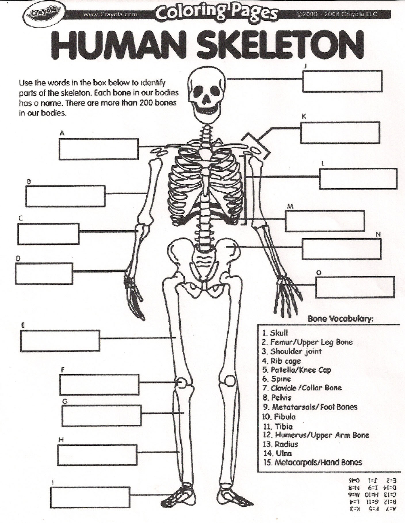 worksheet Body Systems Worksheets High School skeletal system worksheets free library download and skelet l w ksheet high school ksheets libr ry