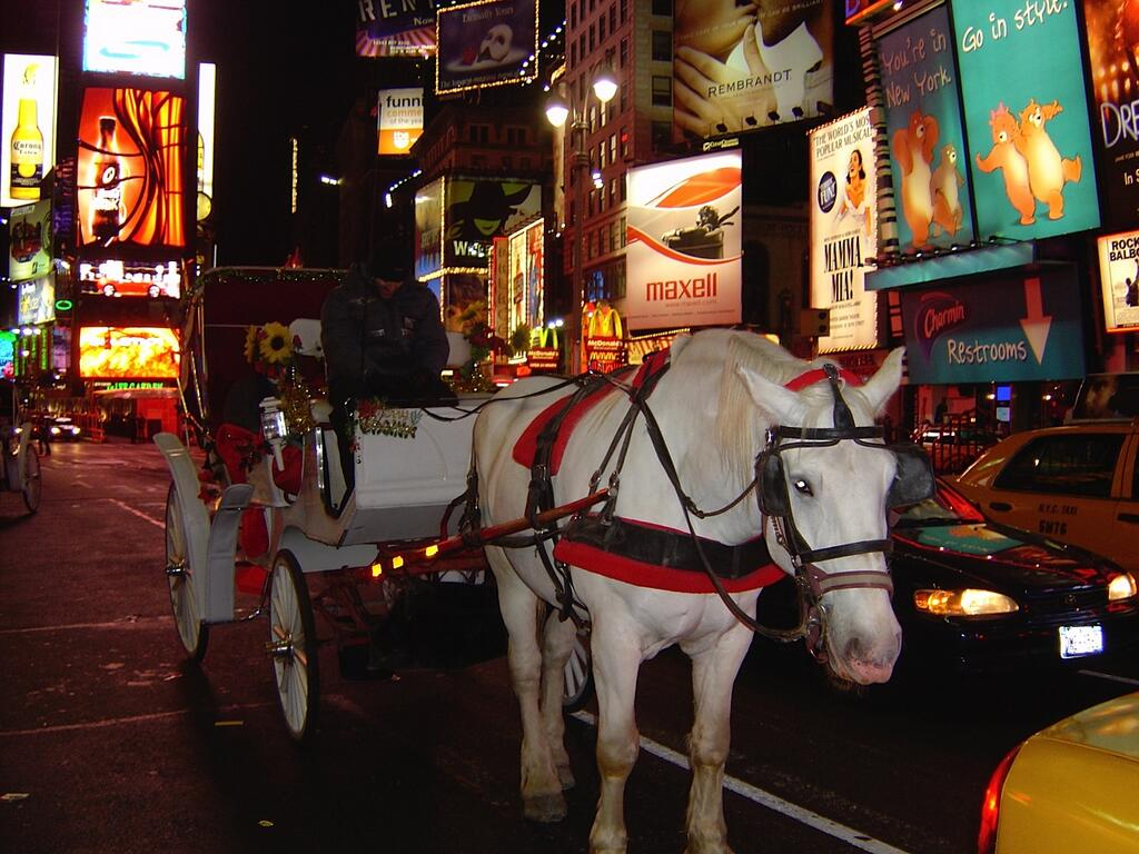Horse Images Nyc Buggy And
