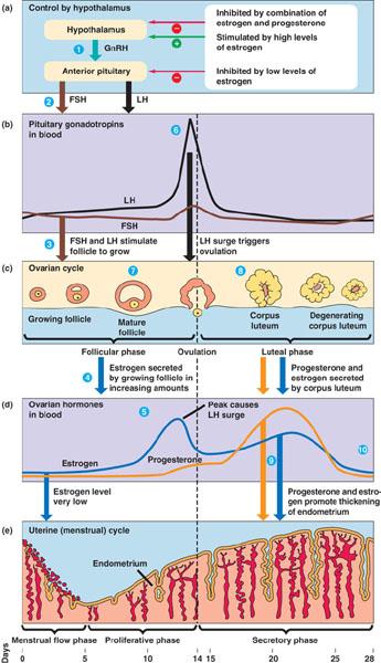 Gallant's Biology Stuff