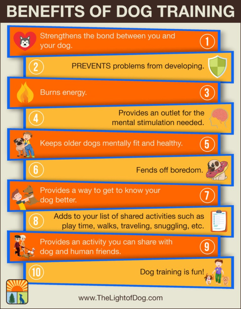 The Benefits Of Training Your Pets