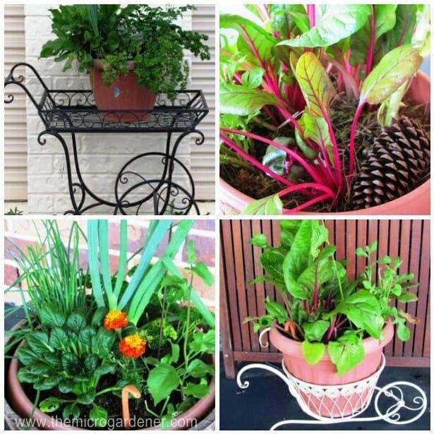 Veggie Seedlings Planters