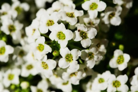 Beautiful spring flower sweet smelling white flower bush spring sweet smelling white flower bush these flowers are very beautiful here we provide a collections of various pictures and photos of beautiful flowers mightylinksfo
