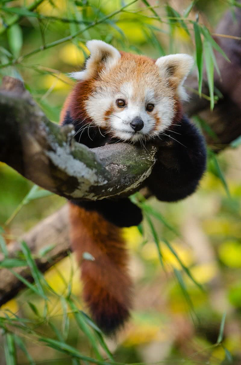 Top 10 Cutest Baby Animals In The World - The Mysterious World