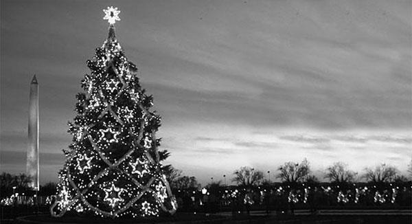 Christmas Tree Washington Dc 1980
