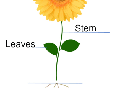Picture of a labeled flower flower shop near me flower shop asteraceae composite inflorescence labeled picture of a flower with its parts labeled parts of a flowering picture of a flower with its parts labeled parts ccuart Image collections