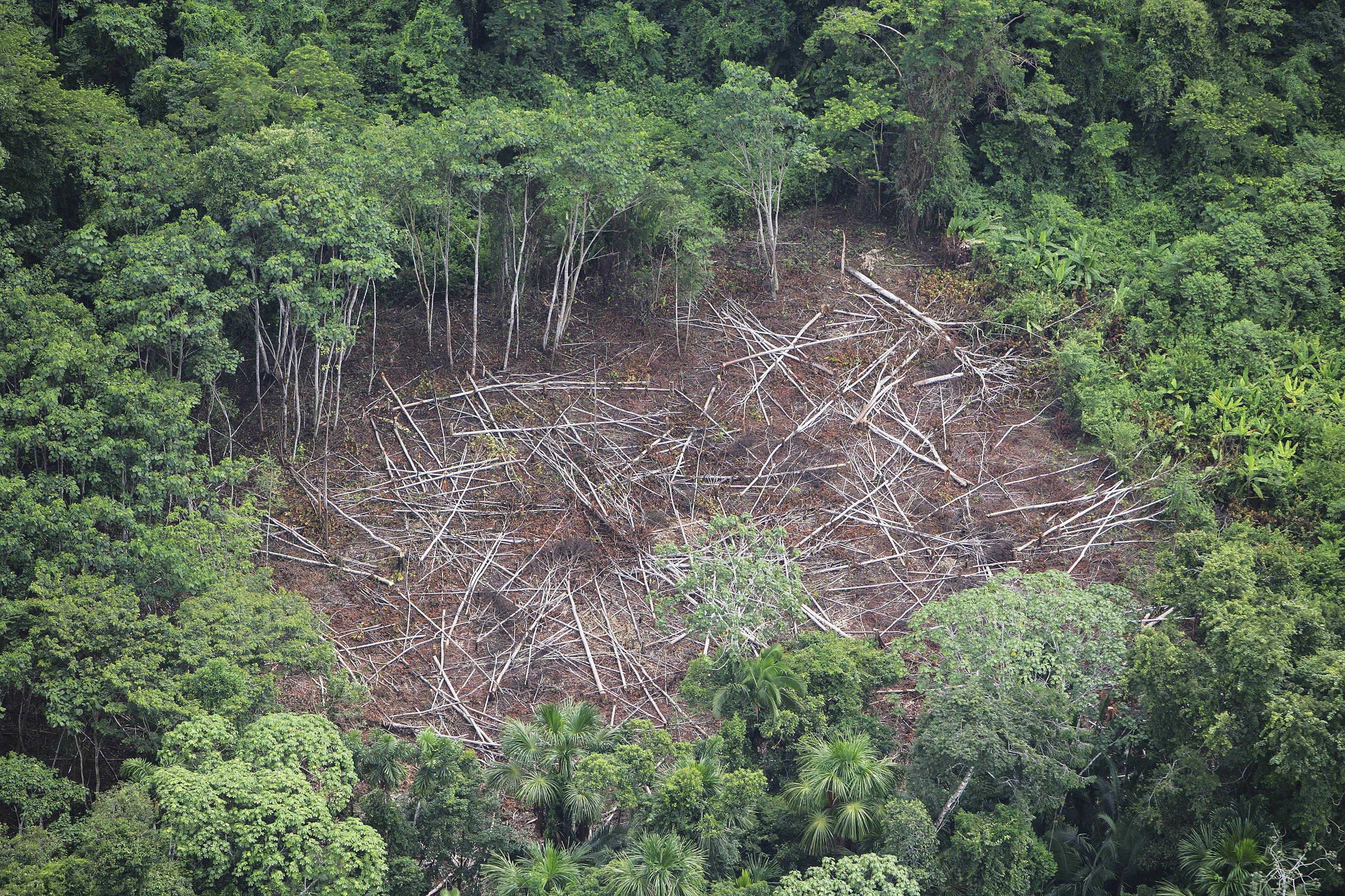 amazon rainforest deforestation - HD3200×2133