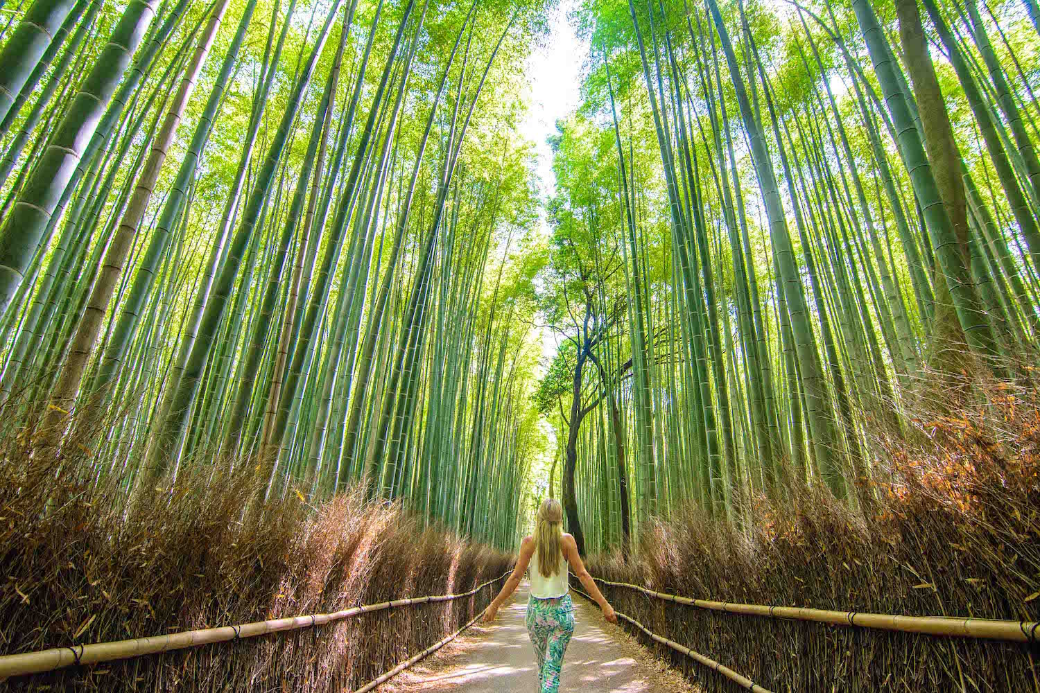 walking inside of Kyoto's bamboo forest in Arishiyama
