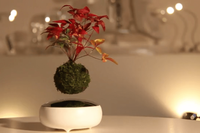 Floating Tree Bonsai