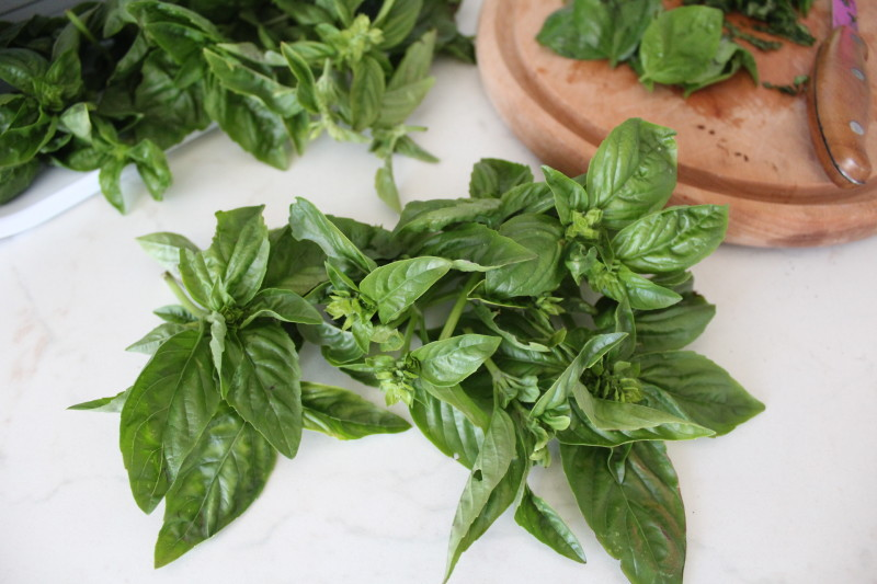 How to store basil in winter
