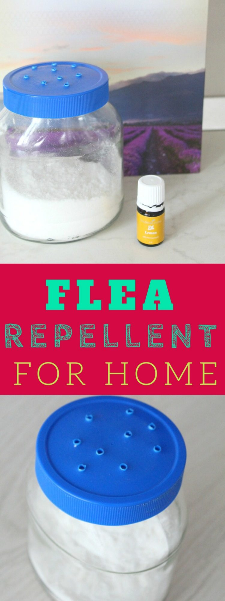 Homemade flea repellent for your home
