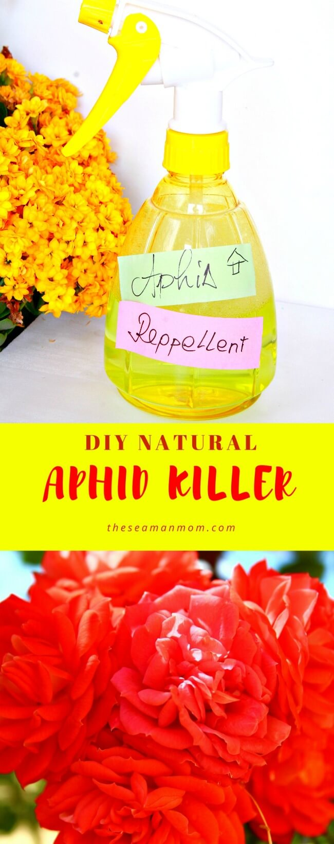 DIY Aphid Repellent