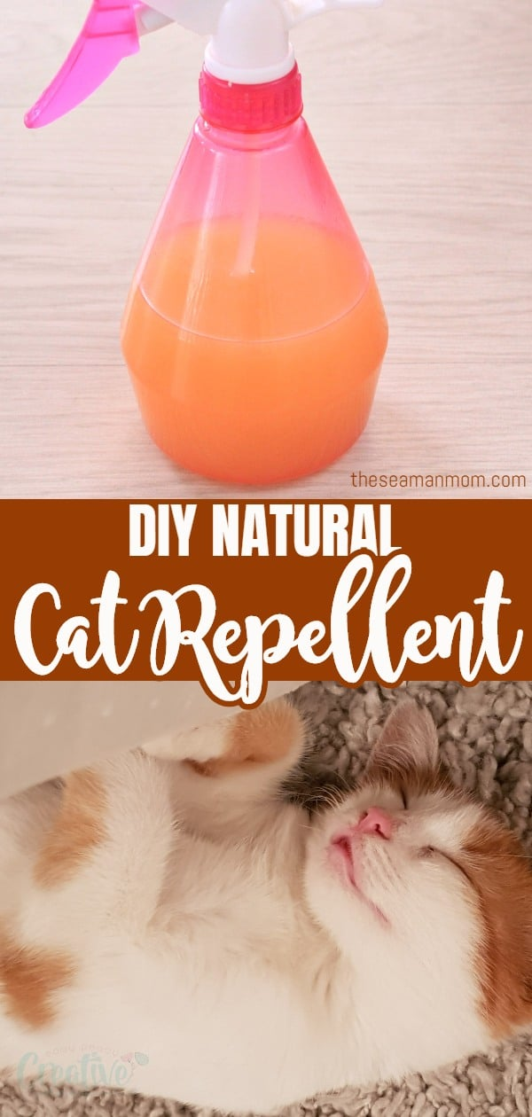 Tired of being frustrated with cats messing around your garden or home? Make a friendly but efficient natural cat repellent in just a few minutes! This cat deterrent is made with a handful of few simple, affordable ingredients and won't hurt the environment! via @petroneagu