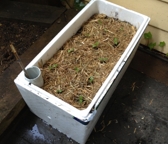 Foam Box Vegetable Garden