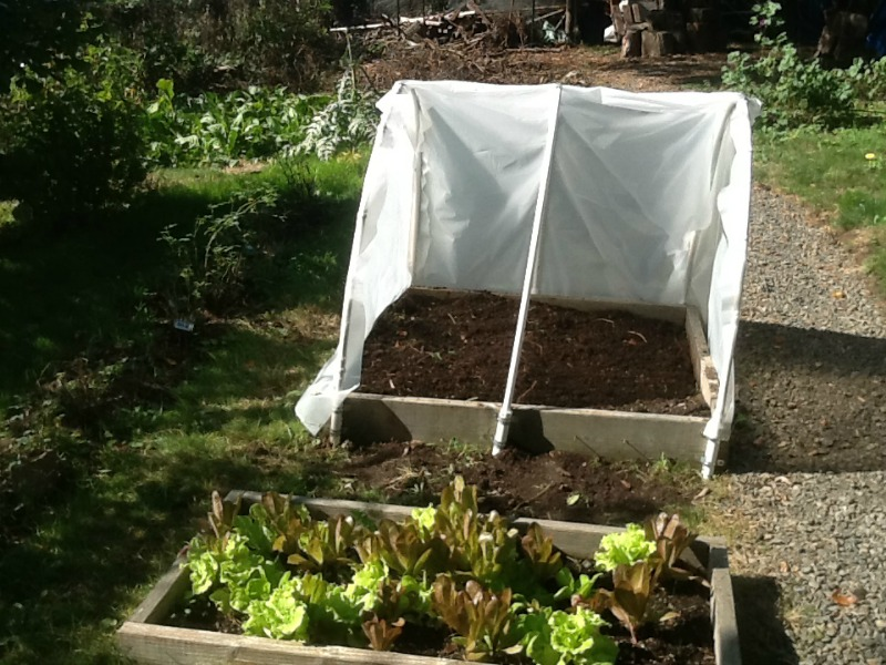 Diy Beds Raised Garden Plan