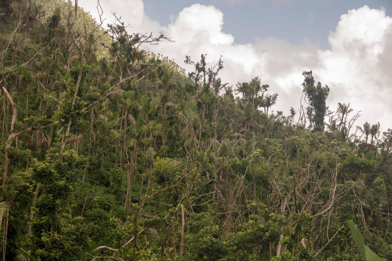 amazon rainforest location - HD5472×3648