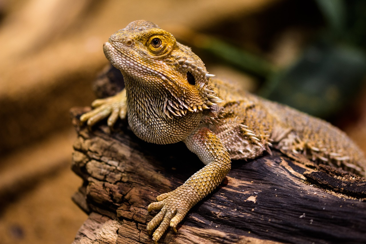 What to Feed Your Bearded Dragon - The Tye-Dyed Iguana ...