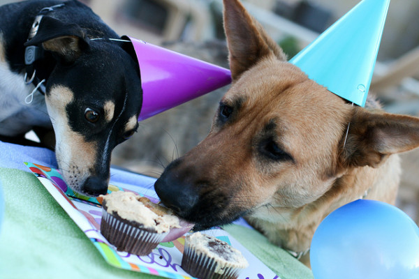 30 Dogs Celebrating Birthday With Special Dog Birthday Cakes