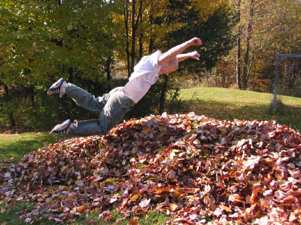 pile of leaves - 1005×753