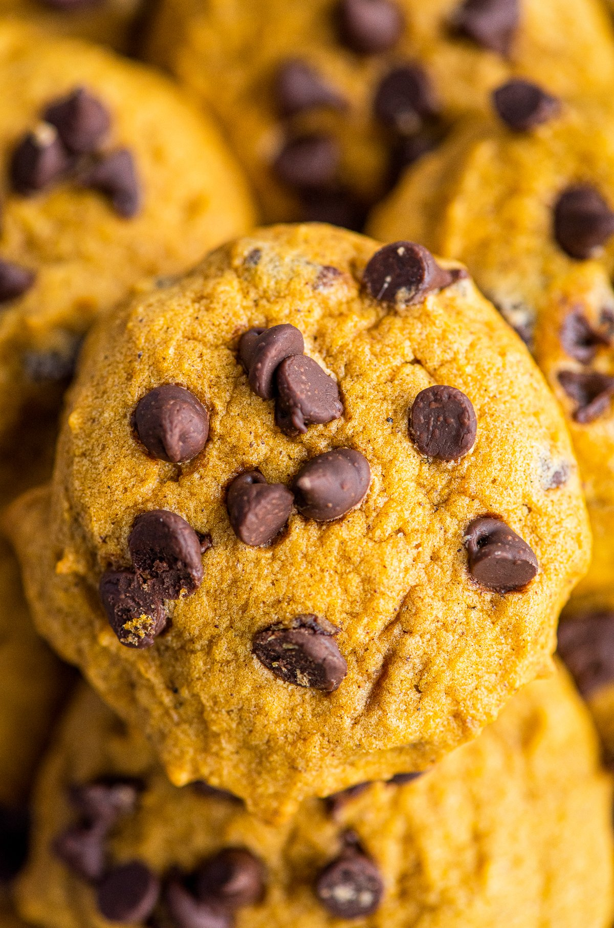 Close up of one cookie.