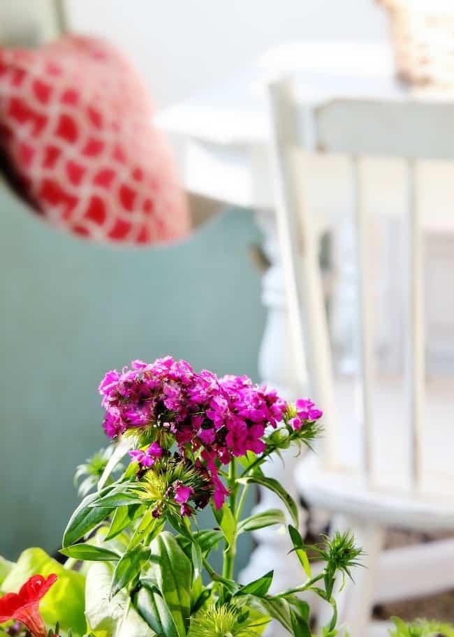 back porch flower