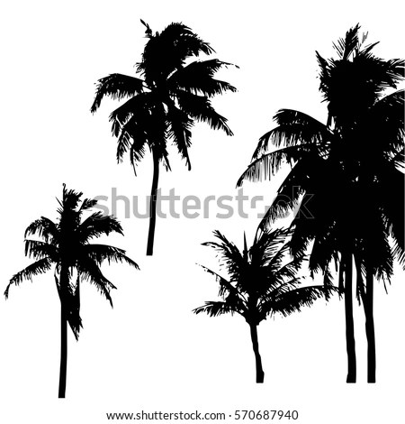 Vector Set Palms Silhouettes Stock Vector 161594606 Shutterstock