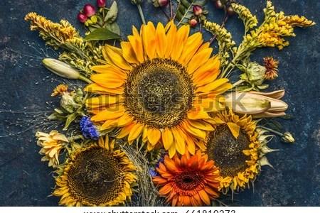 Beautiful Flowers 2019 Fall Background