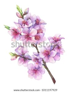 Oriental Cherry Branch Pink Flowers Japan Stock Illustration     Oriental cherry branch with pink flowers  Japan sakura blossom  Traditional  japanese sumi e