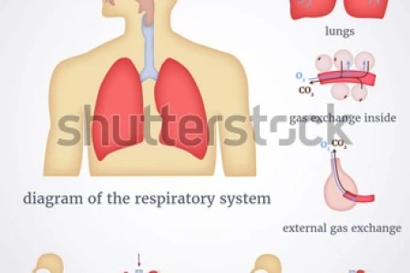 Interior internal stomach gas hd images wallpaper for downloads animation interior stomach gas in the digestive tract johns hopkins medicine health library gas in the digestive tract gas in the digestive tract johns ccuart Gallery