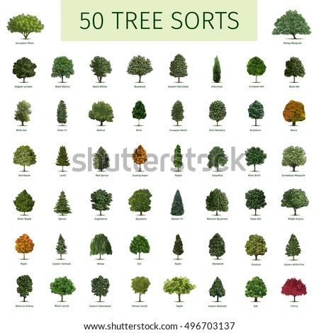 Hornbeam Tree Stock Images, Royalty-Free Images & Vectors ...