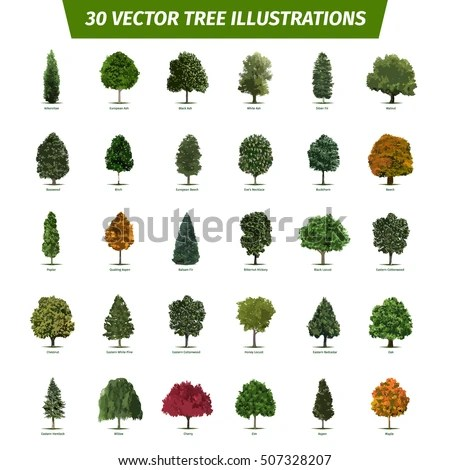 Chestnut Stock Images, Royalty-Free Images & Vectors ...